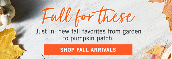 Welcome home, fall! Everything you need to greet your favorite season, right here - SHOP
